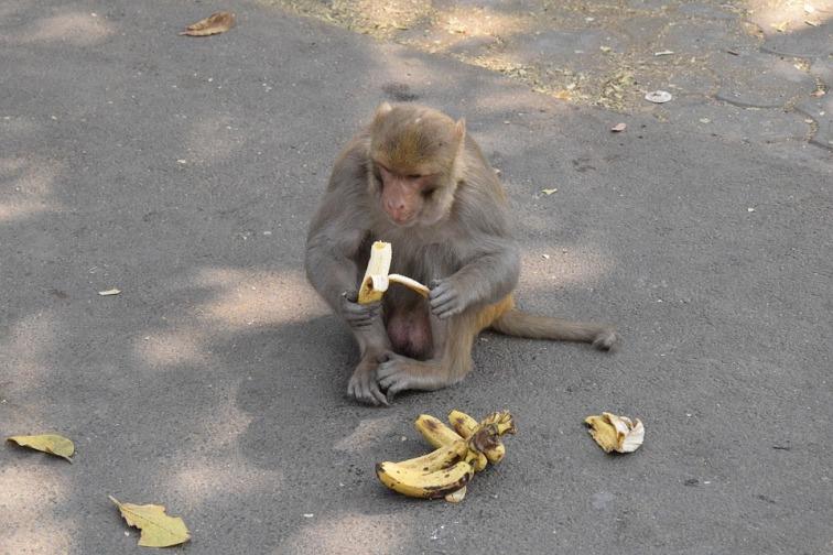monkey-2418851_960_720.jpg